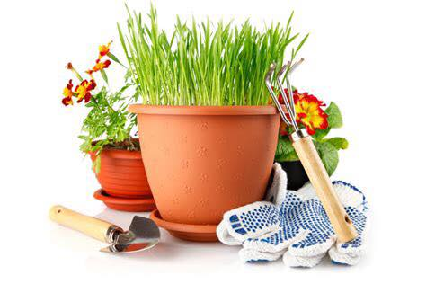 GARDENING IN THE MONTH OF MAY